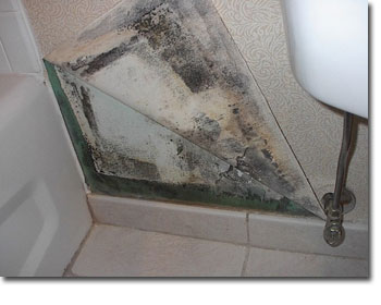 Mold In Bathroom Causes sick house doctor | sick house syndrome | sick home - mold